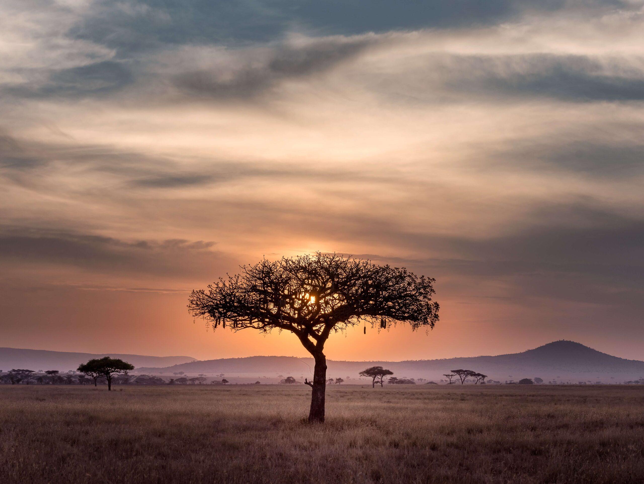 Flyvning I Afrika