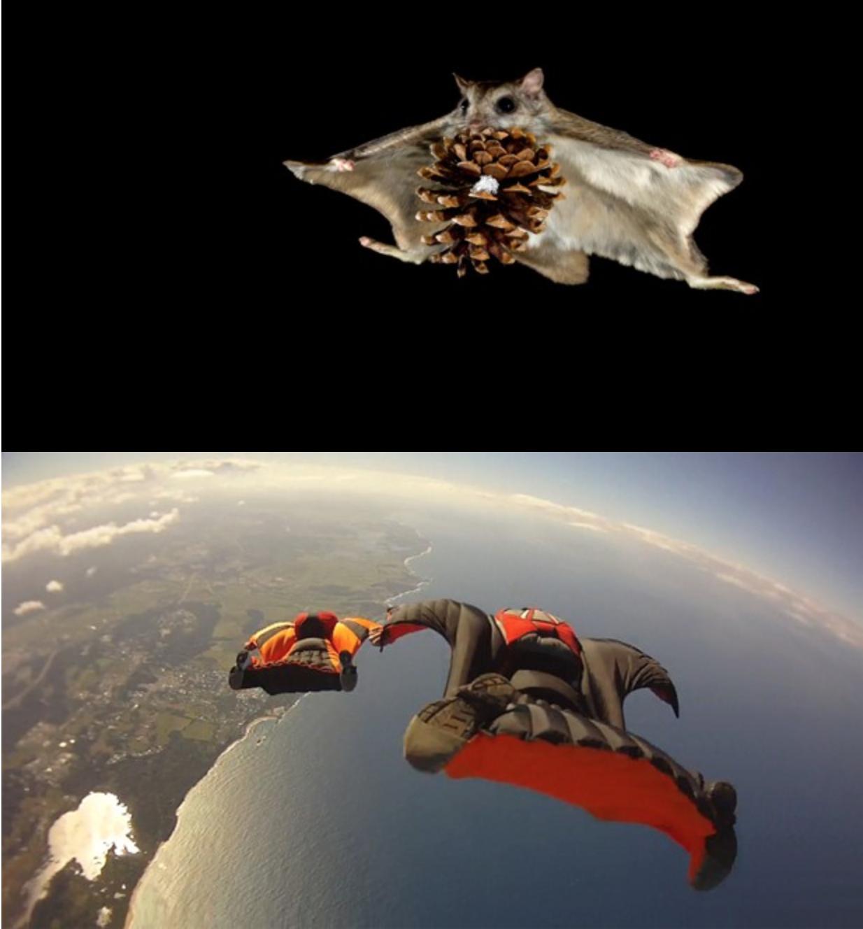 Hvad Svæver Længst – En Tung Eller En Let Flyver?